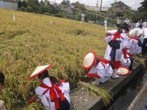 抜穂祭②-1
