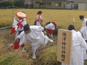 抜穂祭①-1